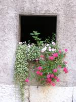 Window Box, Geneva