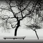 """"""". winter 2008 ."""" by Jillian"""