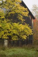 Barn in Fall
