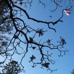 """magnoliasky"" by piratesaregrand"