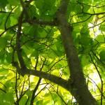 """green tree"" by piratesaregrand"