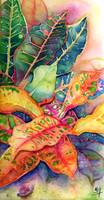 Colorful Croton