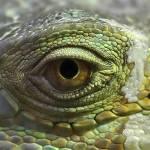 """""""eye2scale"""" by Stevebb"""