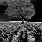 """""""Isolation"""" by Stevebb"""