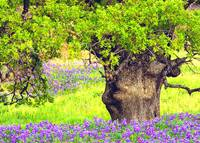 Happy Tree In Meadow Of  Wildflowers