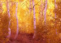 Fall Aspen Trees June Lake Loop