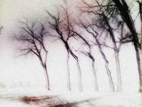 winter trees also
