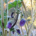 """purpleflower"" by dhill"