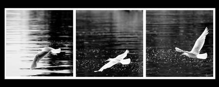 Seagull triptych