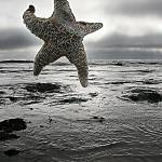 """""""star of the sea"""" by johncurley"""