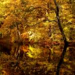 """Autumnal Reflections"" by roger"