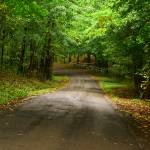 """Fall Road"" by slygoatherd"