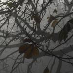 """Texture of branches"" by wheatfields"