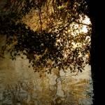 """""""Shady tree"""" by wheatfields"""
