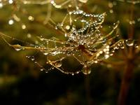 Dew in spiders web