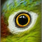 """""""Parrot"""