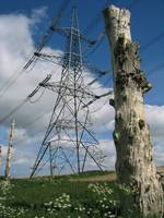 Pylon and stump