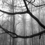 """""""Silence"""" by tacutler"""