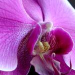 """Orchid I"" by tacutler"