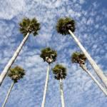 """birthday palms"" by johncurley"