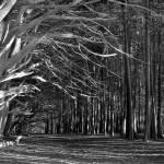 """Imagekind"" by johncurley"