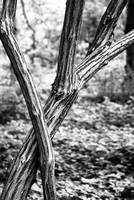 Black White Branch