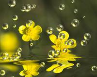 Bubbling Buttercups