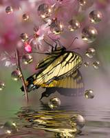 Cherry blossoms-Butterfly and Bubbles
