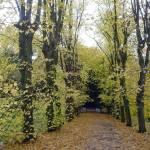 """Carpet of Leaves  (12494-RDA)"" by rodjohnson"