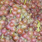 """muscot grapes"" by photographsaroundtheworld"