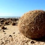 """""""Seaballs (Egagropili)"""" by Ezu"""