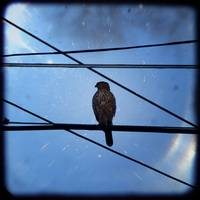 Bird on a Wire (in a maze of wires)