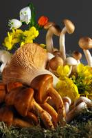 Mushrooms & Mustard