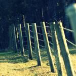 """""""Fenced In"""" by kelseywesley"""