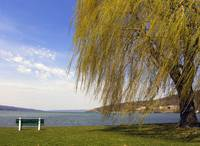 Nature's first Green: Cayuga Lake In Springtime