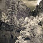 """Zion - infrared trees landscape"" by miir"