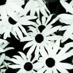 """""""One of last weekends flower shots"""" by manganite"""