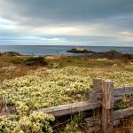 """Seaside Monterey - ocean landscape"" by miir"