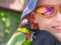 lorikeet & Peter