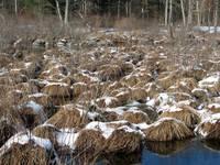 Beaver Pond in Winter