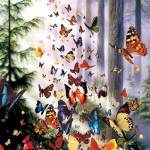 """Butterfly Woods"" by davidpenfound"