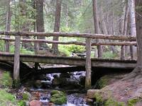 Wooden Bridge on Creek