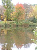 Middletown Pond in Fall