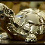 """Silver Turtle"" by michelepincanelli"