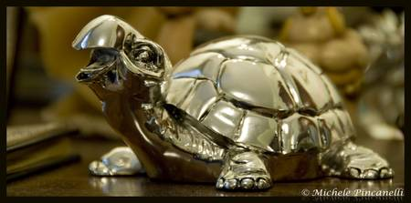 Silver Turtle