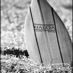 """Kialoa Paddle"" by Photosbynalani"