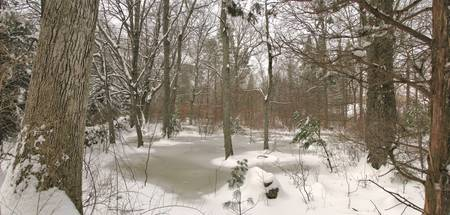 Vernal Pond with Snow