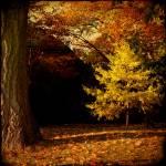 """""""autumn idyll"""" by corfu"""