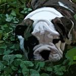 """""""Puppy in the garden II"""" by DeborahSprague"""