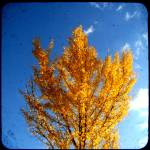 """ginko tree 2 ttv"" by tikicat"